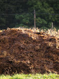 Cow manure heap. Rural scene Royalty Free Stock Image