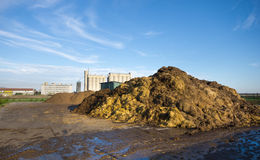 Cow manure. On pile on farmland Royalty Free Stock Image