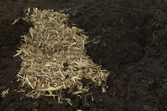 Cow manure with straw Stock Photos