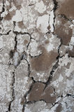 Cow Manure Wall Royalty Free Stock Image