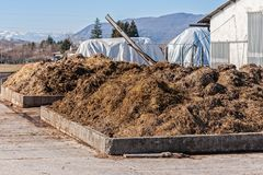 Cow manure that will be used to fertilize. Collected in special containers stock photos