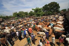 Cow markets Stock Photos