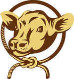 Cow mascot tied square knot rope Royalty Free Stock Photography