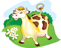 A cow on a meadow. A milch cow is standing on a pasture. It is well-fed and groomed Stock Photo