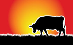 Cow on a meadow. A vector cow grazing on the meadow Royalty Free Stock Photo