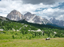 Cow on meadow in alpine mountains. Cow grazing green grass on alpine meadow surrounded by high rocky mountains stock photos