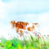 Cow on the meadow. Farm animals. Stock Images