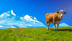 Cow on meadow Stock Photos