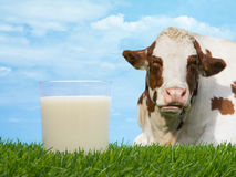 Cow Milk Stock Image