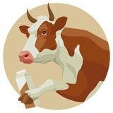 Cow and milk Stock Photography