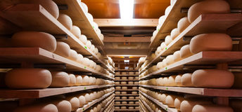 Cow milk cheese, stored in wooden shelves Stock Photo
