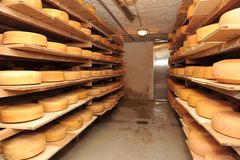 Cow milk cheese, stored in a wooden shelves. And left to mature Stock Photography