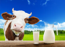 Cow and milk. And green grass Stock Photo