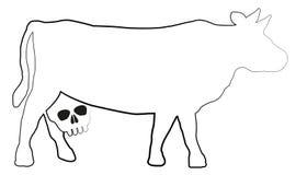 Cow Milk Health Risk Udder Skull Stock Images