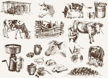 Cow and milk products. A compilation of vector illustrations of cows, milk and other dairy products Royalty Free Stock Images