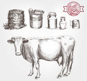Cow and milk products Stock Images