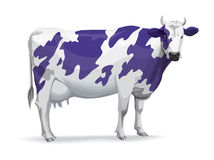 Cow in Milka style Stock Photos