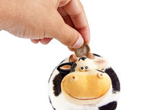 Cow moneybox Stock Photo
