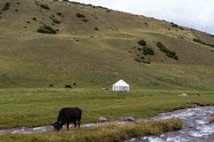 Cow Mountain yurt Stock Images