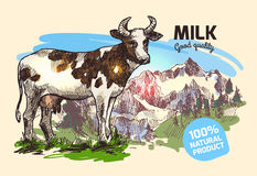 Cow and mountains Royalty Free Stock Photo
