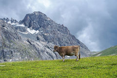 Cow mountains Royalty Free Stock Photos