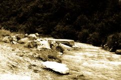 Cows near river, old photo. Cow in mountain near a river. Old style photo Royalty Free Stock Images