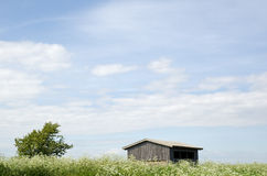 Cow parsley at house. With tree and blue sky Royalty Free Stock Photo