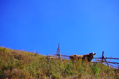 A cow pasture. Of Beijing Lingshan Royalty Free Stock Photo