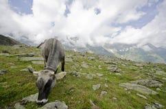 Cow pasture Royalty Free Stock Photos
