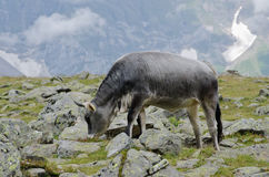 Cow pasture Stock Image