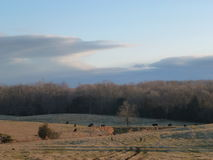 Cow Pasture in the Winter Stock Photos
