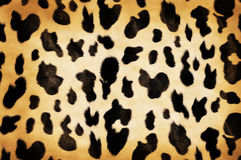 Cow pattern Royalty Free Stock Photo