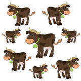 Cow pattern Royalty Free Stock Images