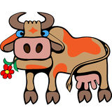 Cow. Stock Images