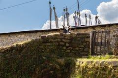 Cow peeps stone fence pharm . Cow peep stone fence building farm. Gosaikunda trekking route, Langtang mountains region, Nepal Stock Image