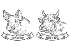 Cow and pig head. Milk farm, butcher shop. Hand drawn sketch in a graphic style. Vintage vector engraving illustration with ribbon for poster, web. Isolated on Royalty Free Stock Image