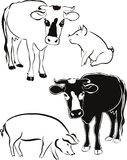 Cow pig isolated Royalty Free Stock Images