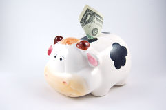 Cow piggy bank Stock Image