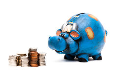 Cow piggy bank with coins. Blue cow piggy bank isolated on a white background with coins Stock Photos