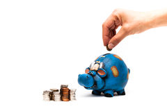 Cow piggy bank with coins hand closeup. Blue cow piggy bank isolated on a white background with a man hand closeup Stock Image