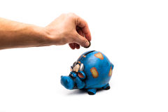 Cow piggy bank with hand detail. Blue cow piggy bank isolated on a white background with a man hand closeup Stock Photos
