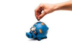 Cow piggy bank with hand detail. Blue cow piggy bank isolated on a white background with a man hand closeup Royalty Free Stock Images
