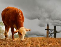 Cow with Pollution. Composite of grazing cow with polluting smoke stack in distance Royalty Free Stock Photo