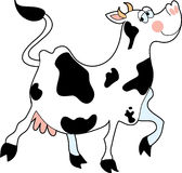 Cow Prancing Royalty Free Stock Photography