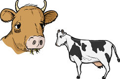 Cow Profile. Illustration of two types of cows isolated on white Royalty Free Stock Photography