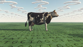 Cow and questions clouds and genetic code on ground Stock Photos