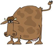Cow With A Raised Tail. This illustration depicts a cow with its tail raised Stock Photography