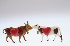Cow and red heart royalty free stock photos