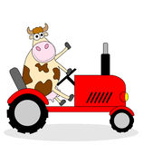 Cow riding on a tractor Stock Images