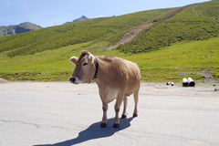 Cow on the road Royalty Free Stock Photo